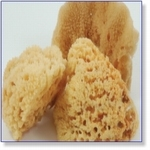 7406A - Paint Supplies :  Natural Sponges 1 pice ca. 6 cm