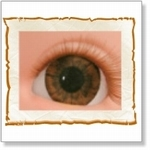 7506 - Eyes :  HQ Acryl Eyes Dark Brown